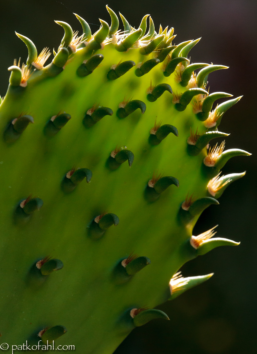 Photograph Nopalito by Pat Kofahl on 500px