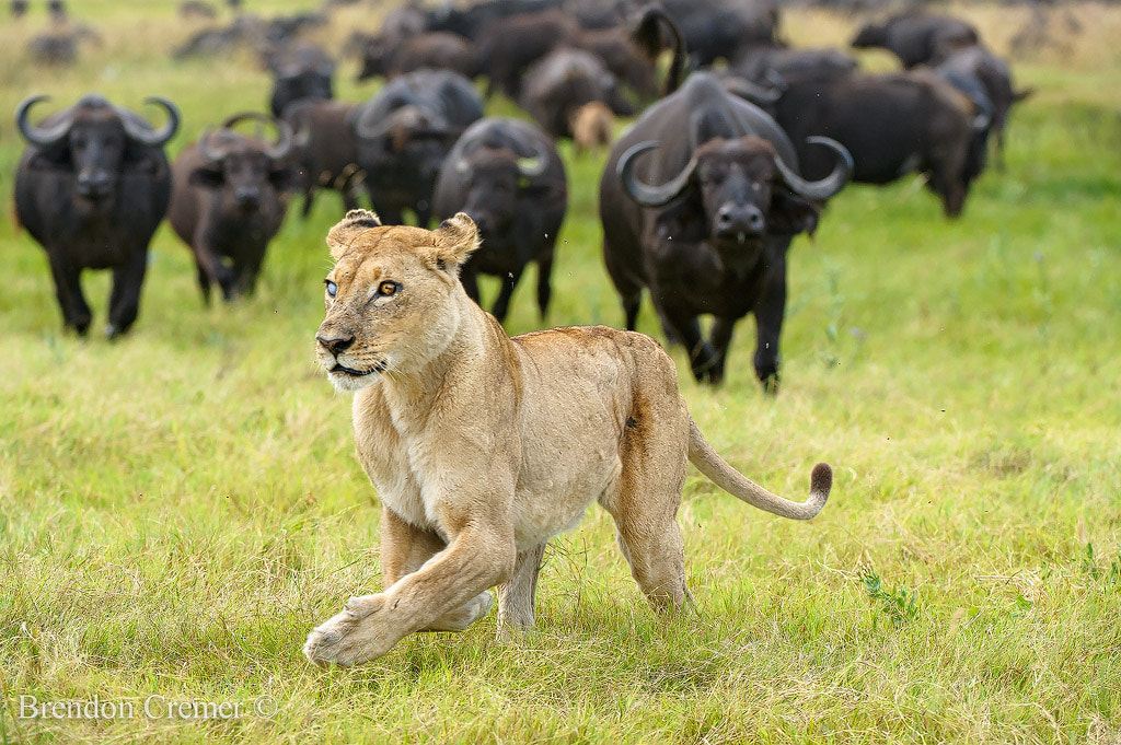 Photograph Hunter Hunted by Brendon Cremer on 500px