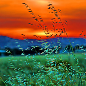 Summer Breeze by Rob Bishop (RobBishop)) on 500px.com