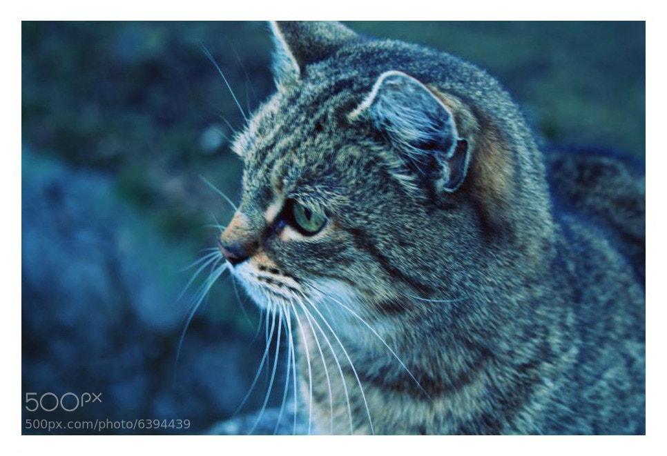 Photograph Cat stories II. by Barbora Koubkova on 500px