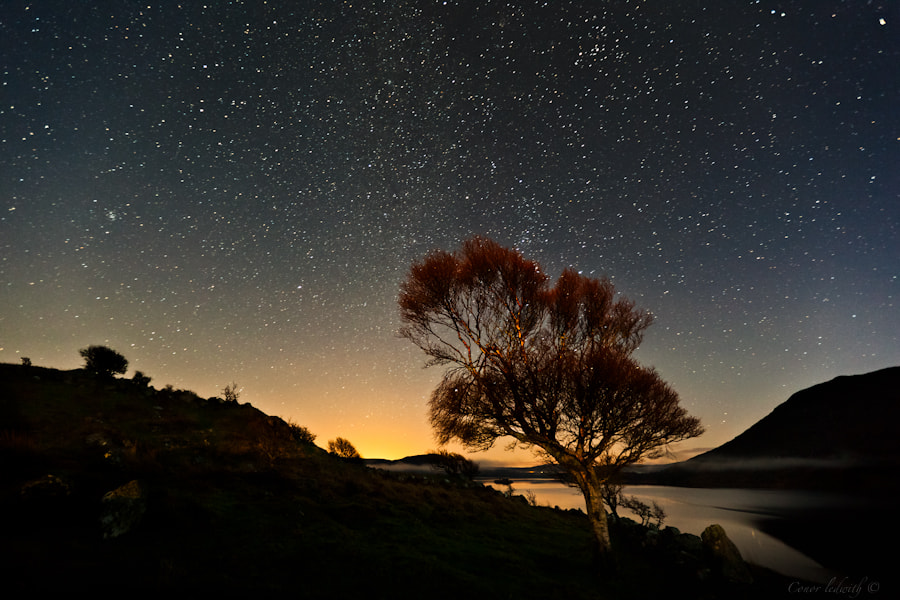 Photograph The One Birch by conor ledwith on 500px