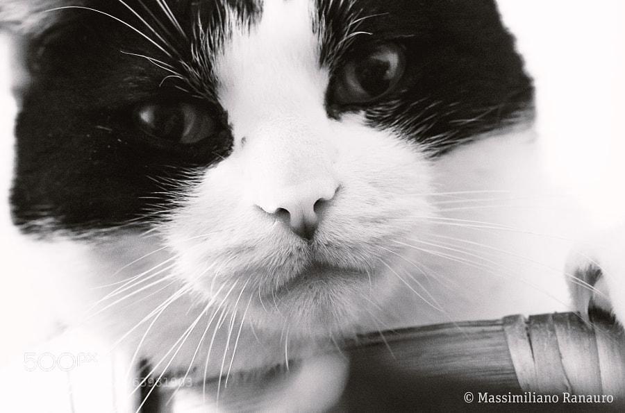 Photograph Figaro alias Pippo Formaggio by Massimiliano Ranauro on 500px