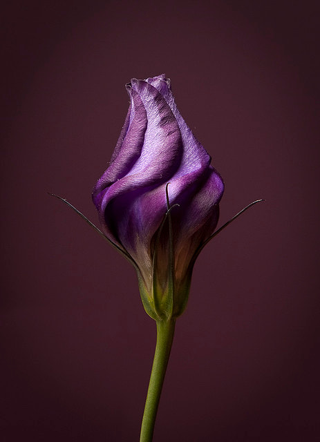 Photograph Purple by Philip O'Toole on 500px