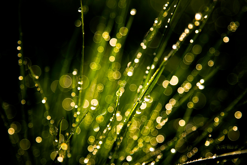 Photograph Green explosion by Zdravko  Horvat on 500px