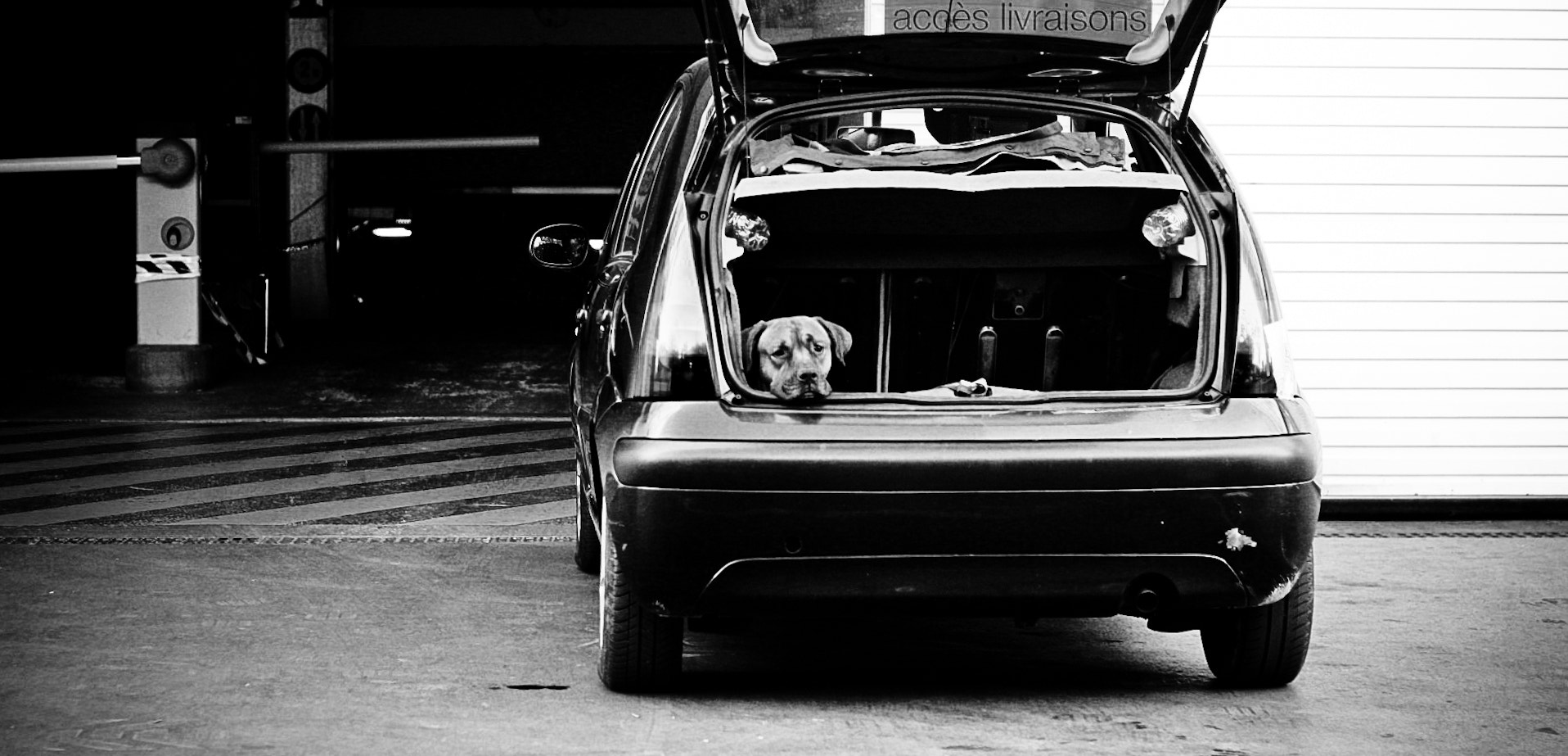Photograph Dog In The Trunk by Mehdi Sersab on 500px