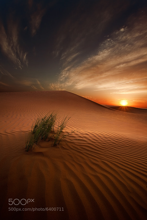Photograph Desert Light by Ahmed Altoqi on 500px