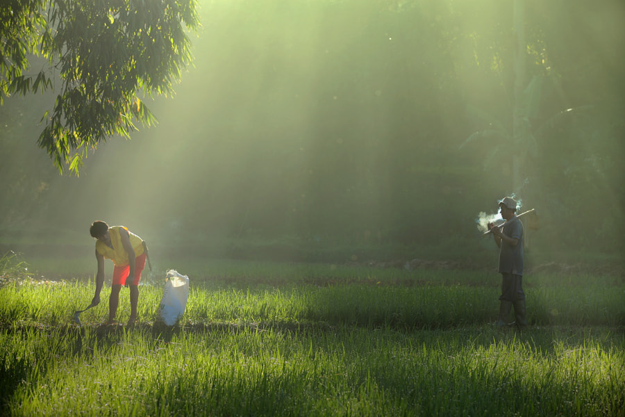 Photograph morning in the fields by dewan irawan on 500px
