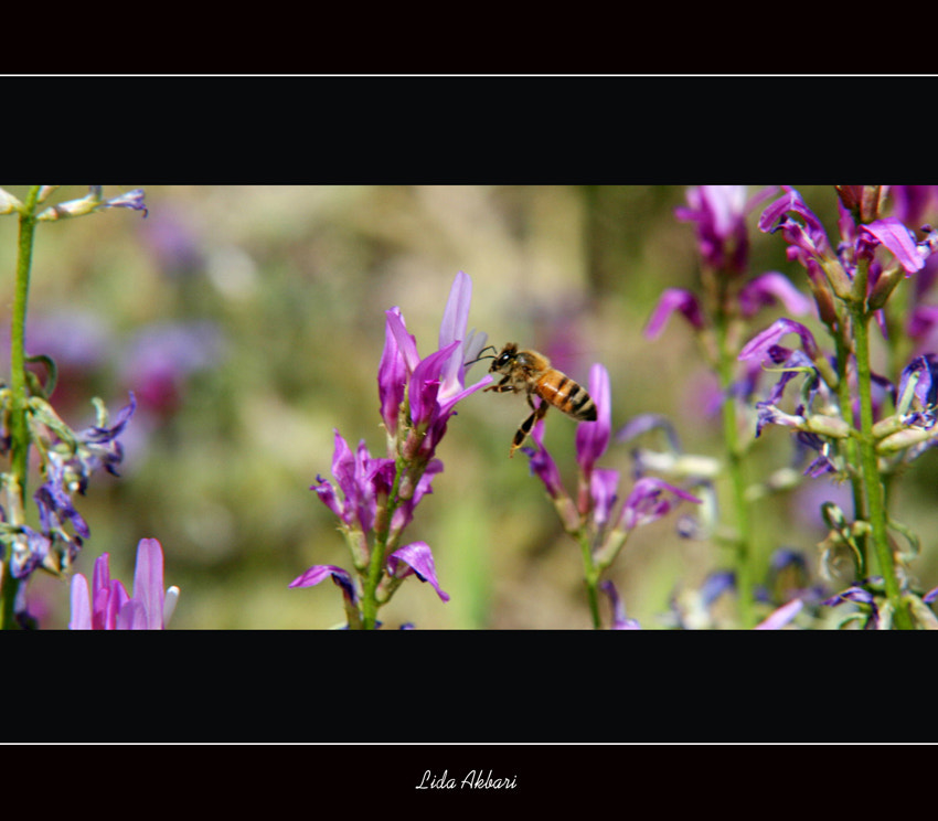 Photograph dancing bee! by happy girl on 500px