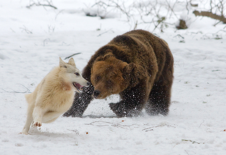 Photograph Catch me if you can by Gennady Matveenkov on 500px