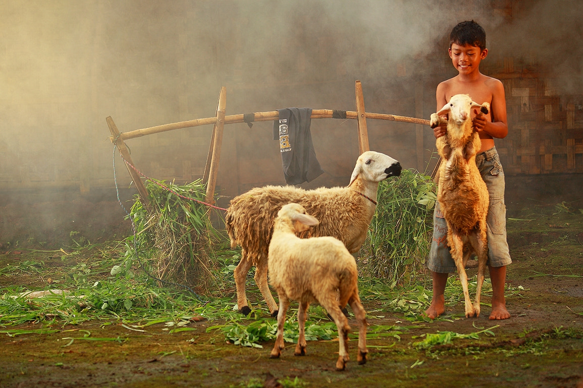 Photograph A Boy & His Sheeps by Rizal Arnex on 500px