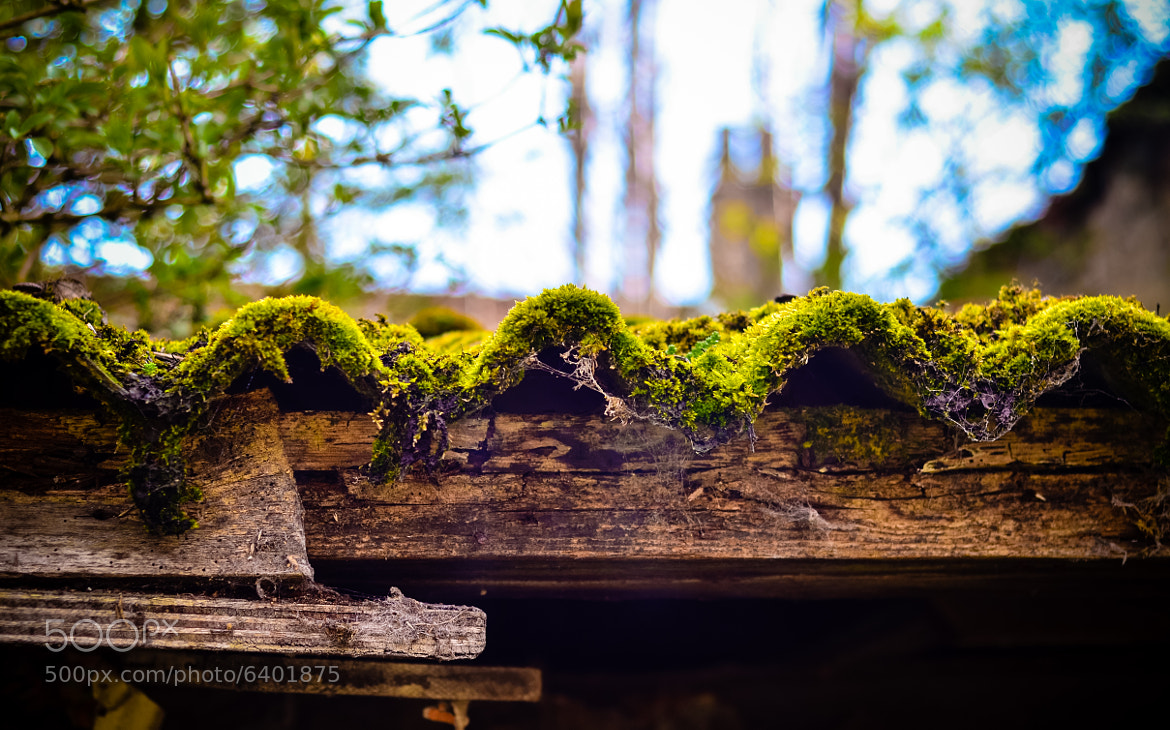 Photograph moss Roof by Shane Rounce on 500px