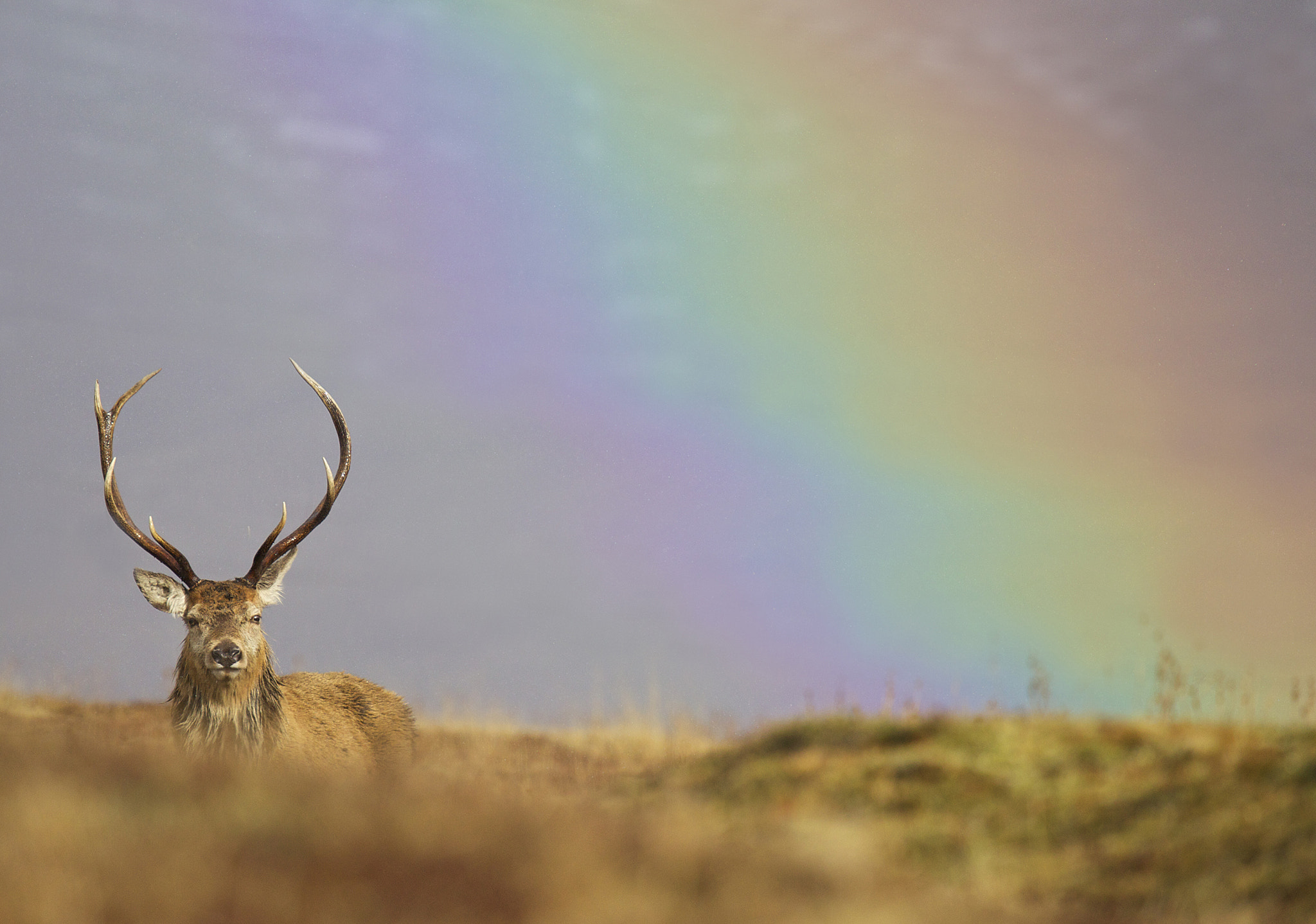 Photograph Stag by Sylwia Domaradzka on 500px