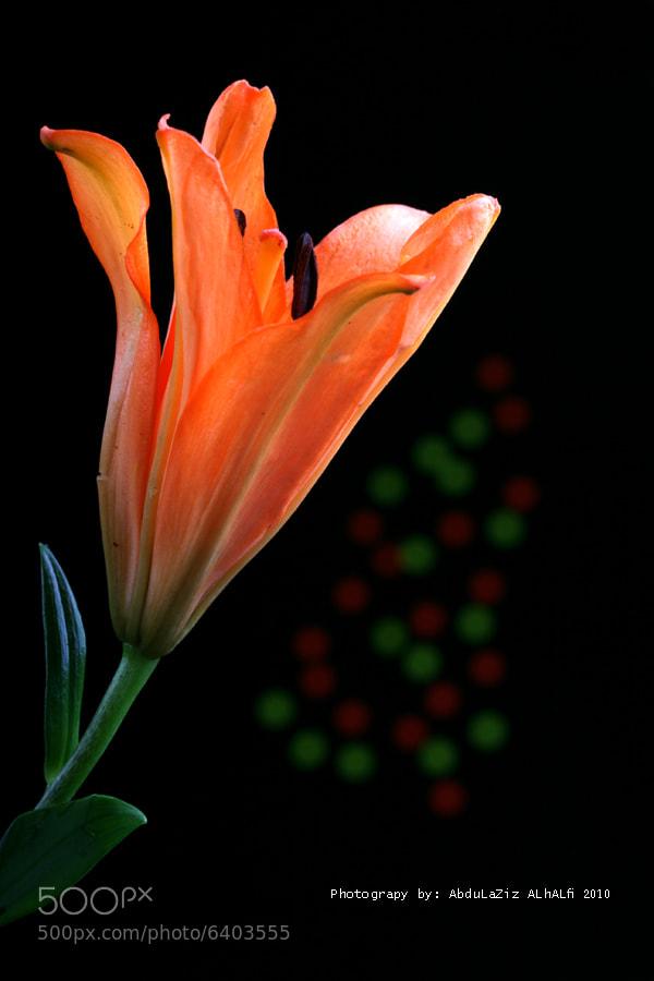 Photograph Rose by Abdulaziz Alhalfi on 500px