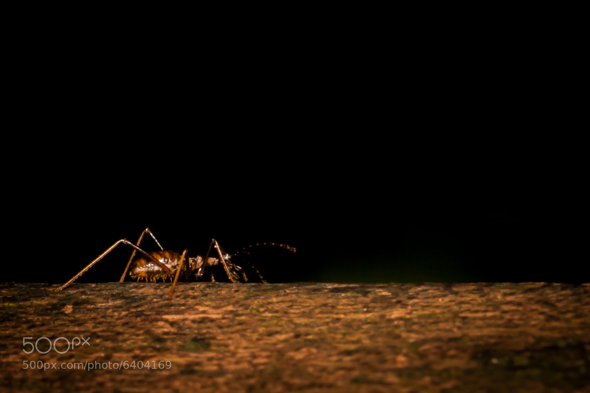 Photograph Termite by Calvin Chan on 500px