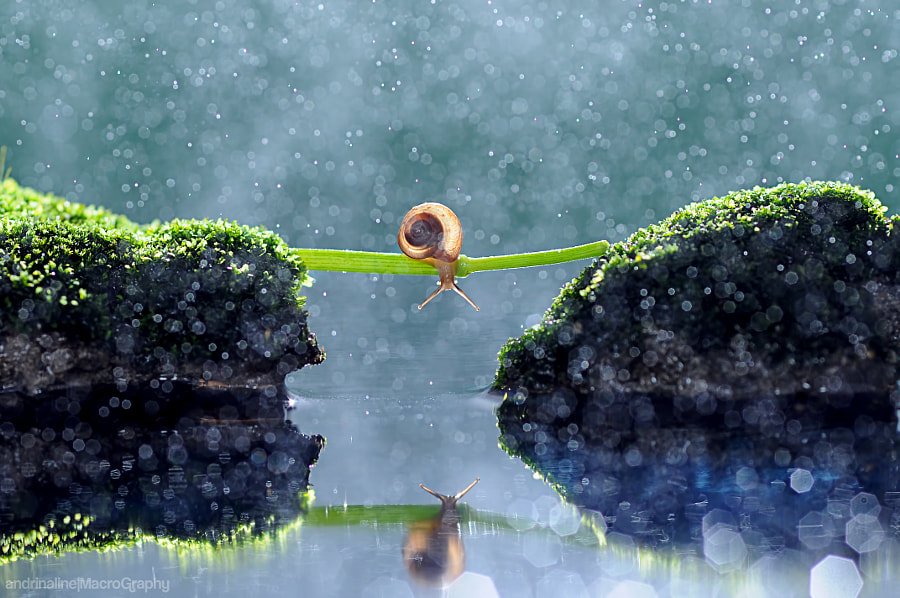 Ho I am by Andri Priyadi on 500px.com