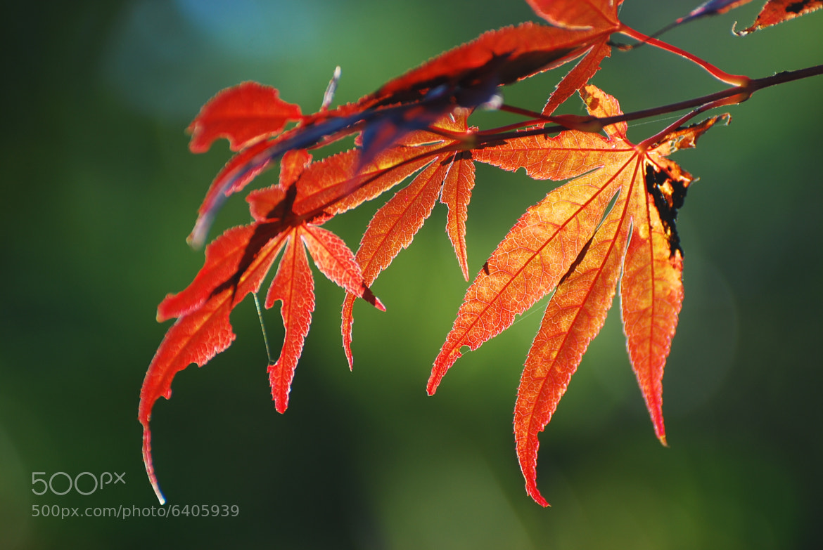 Photograph autumn starts by Ryan Young on 500px