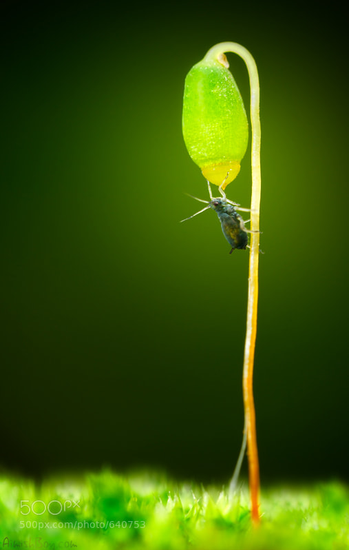 Photograph Green Energy by AimishBoy (Nadav Bagim) on 500px