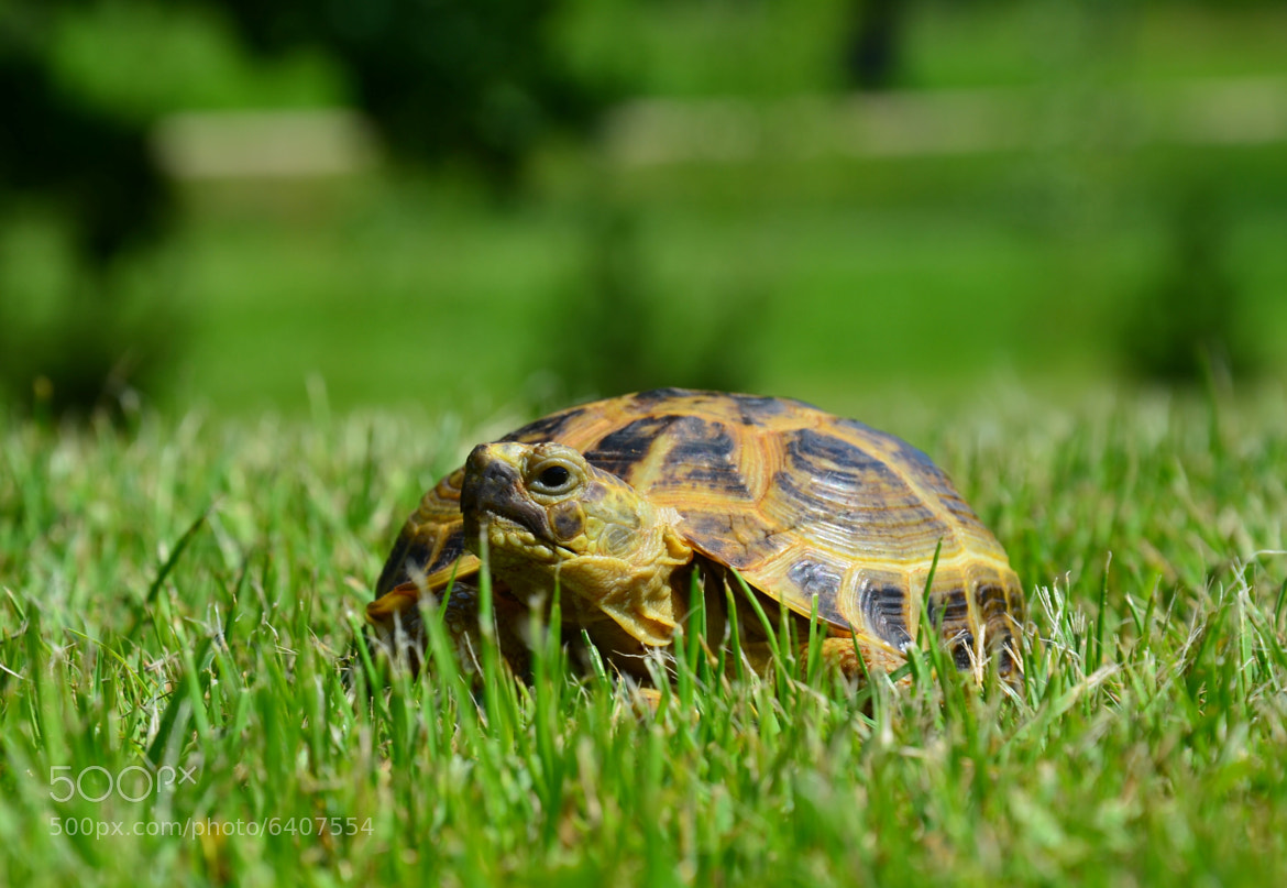 Photograph Mr. Turtle Kexas by Edvardas Patumsis on 500px