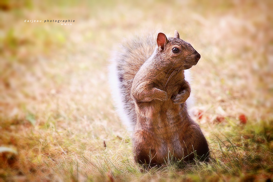 Photograph attitude by Jean Darveau on 500px