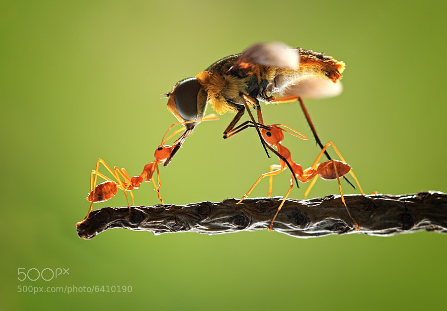 Photograph team work by shikhei goh on 500px