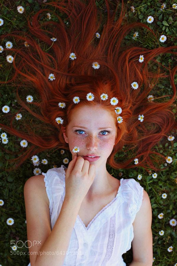 Photograph Daisy by Maja Top?agi? on 500px