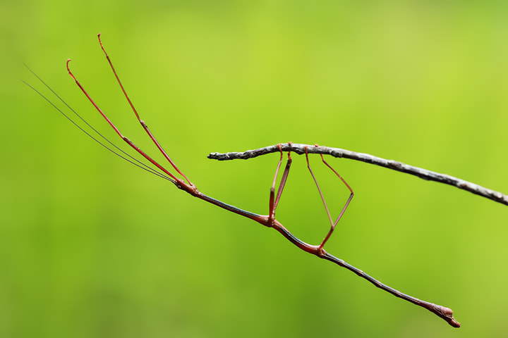 Photograph walking stick by Robin Lung on 500px