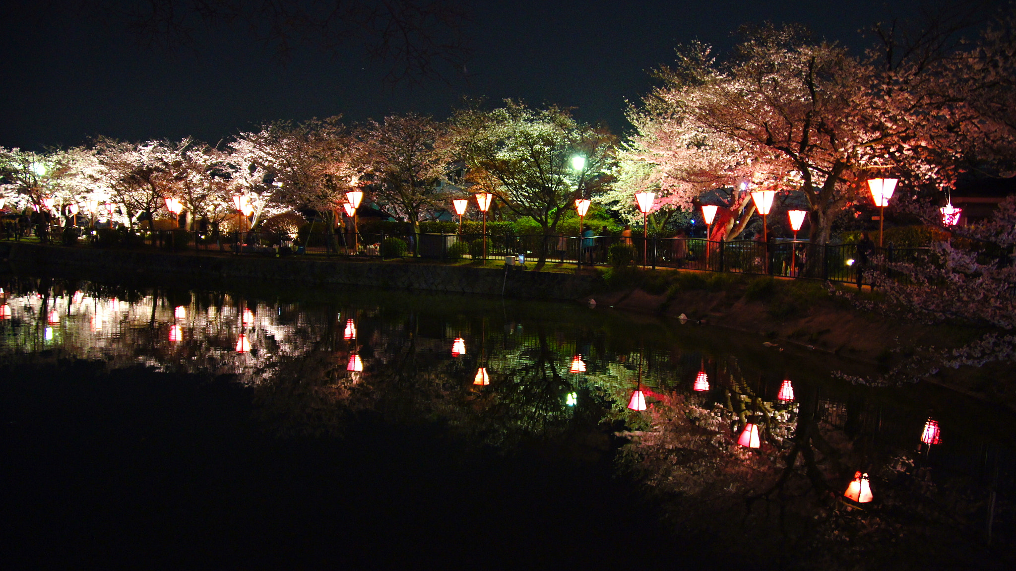 Photograph Cherry blossoms at night by Inoue Keiichi on 500px