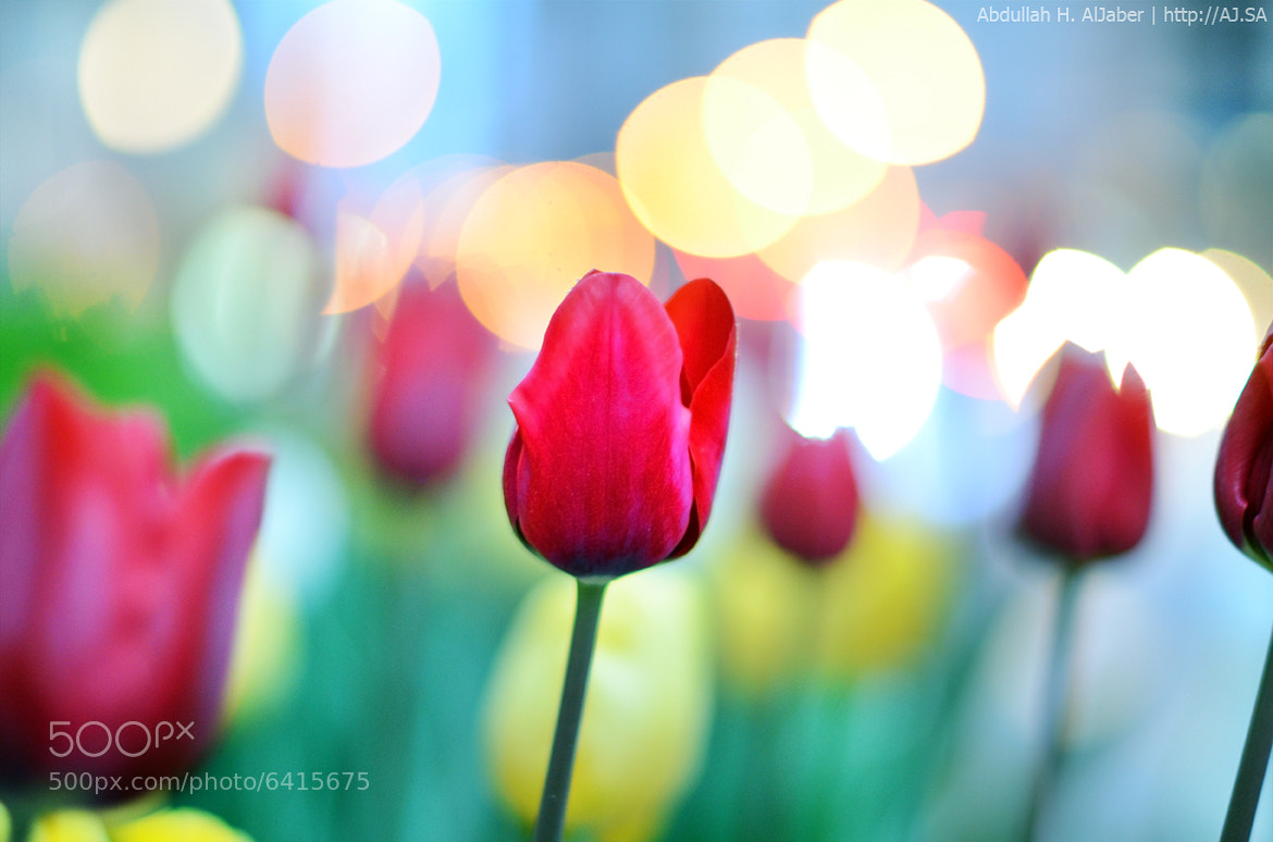 Photograph Welcome Spring by Abdullah AlJaber on 500px