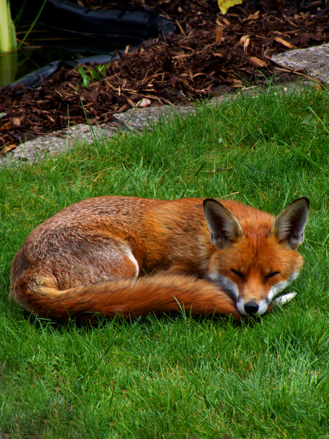 Photograph Taking a Nap by Rachel Kearns on 500px