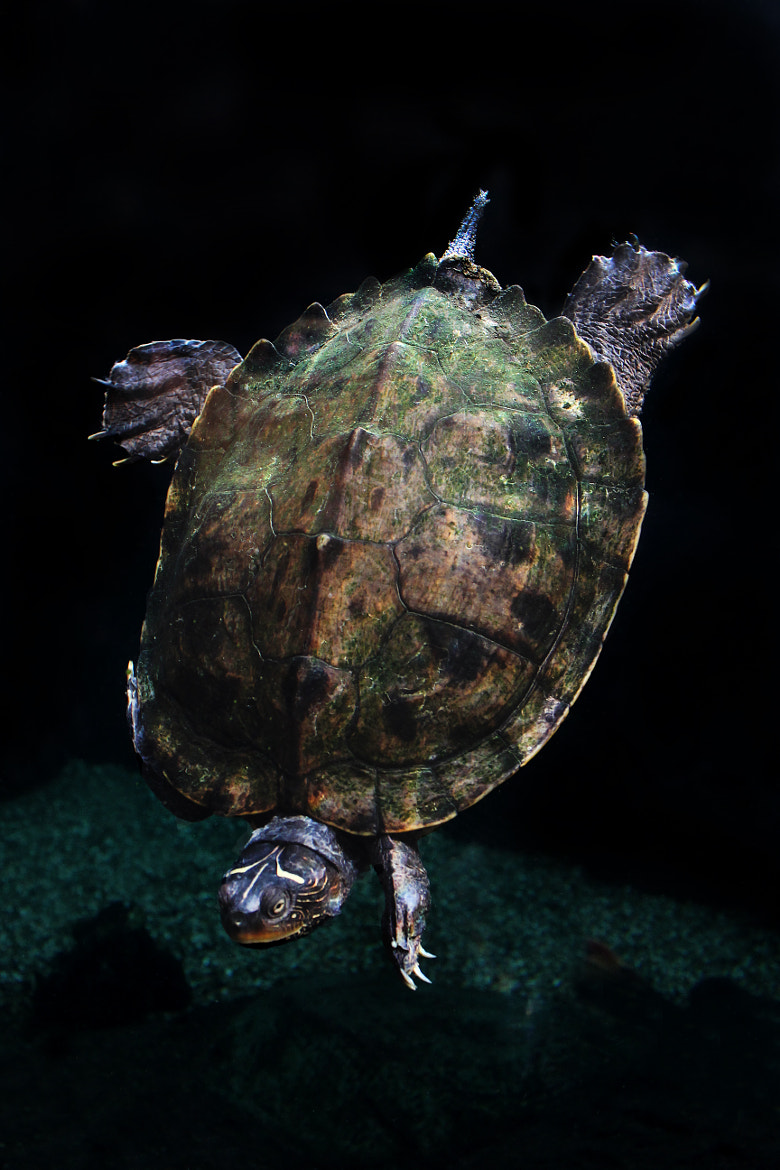 Photograph Terrapin by Anni Skilton on 500px