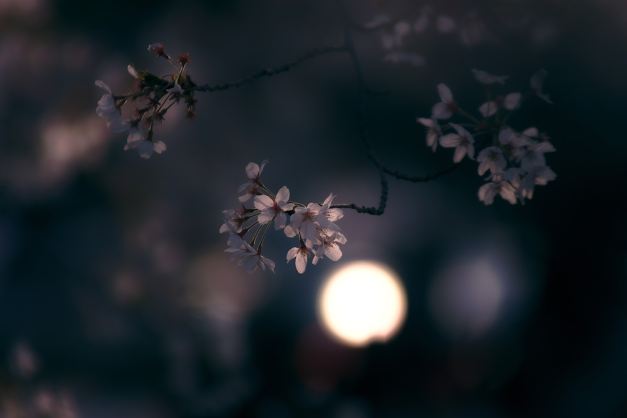 Photograph spring light by Junya Hasegawa on 500px