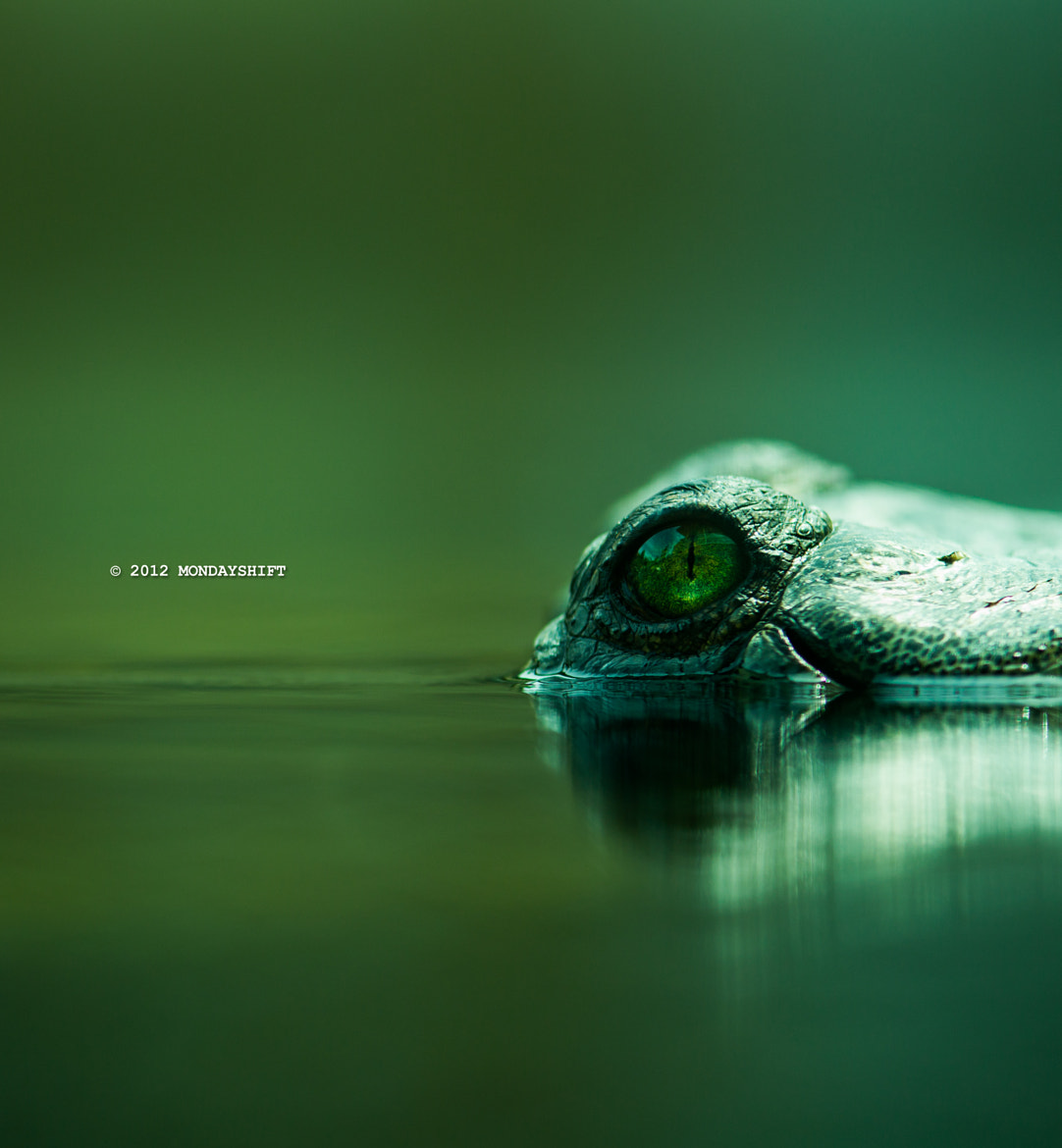 Photograph aligator 4_1 by max mcdonald on 500px