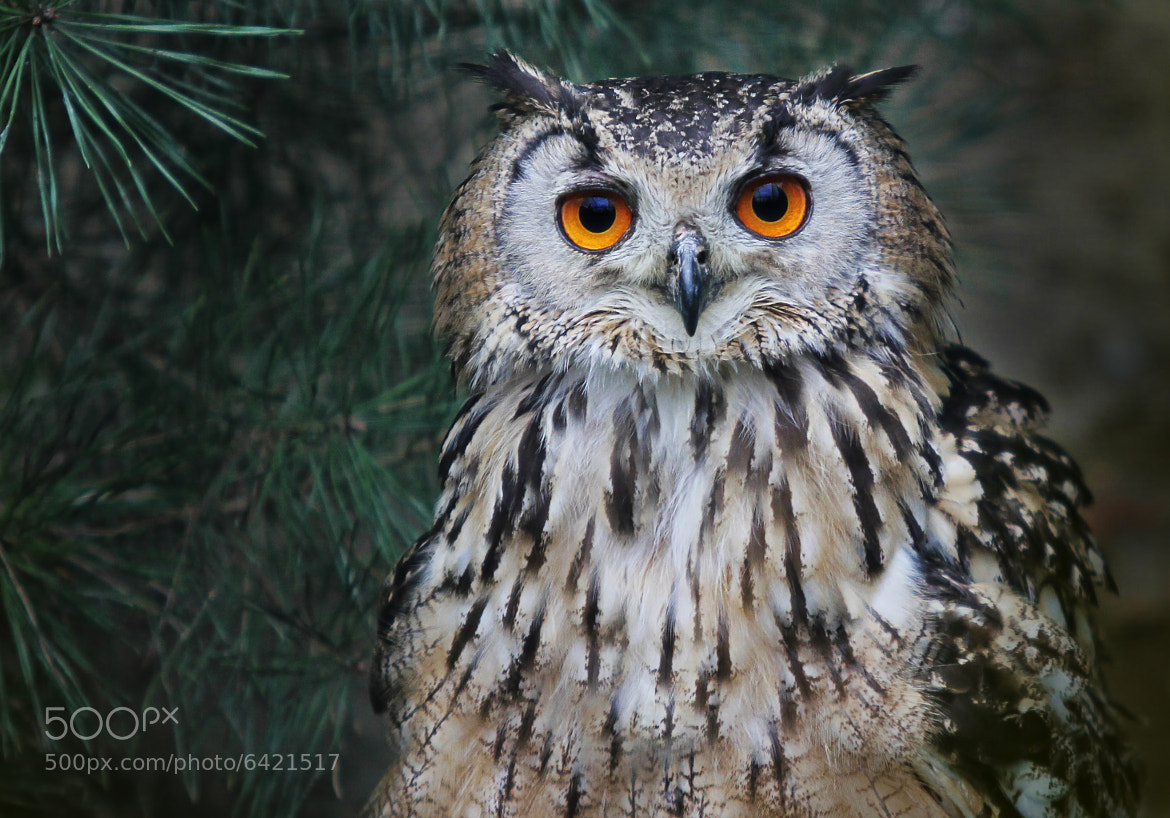 Photograph Look into my eyes by Alida Jorissen on 500px