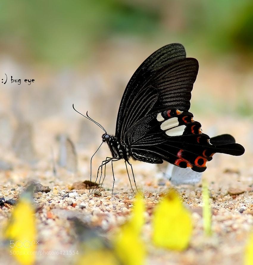 Miss Helen by bug eye :) (bug_eye)) on 500px.com