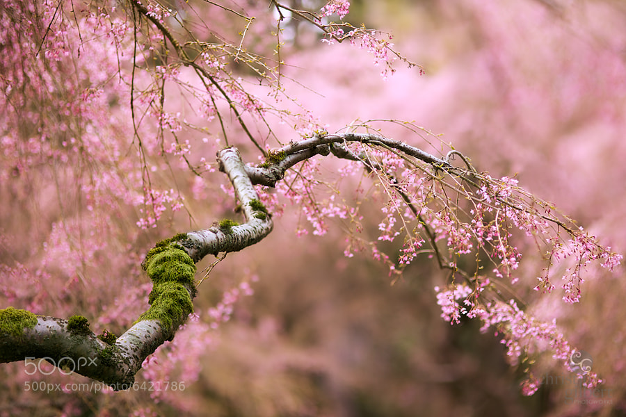 Happy Spring by Christin Gilbert on 500px.com