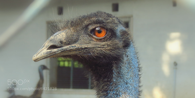 Photograph EMU by Venkitesh Harihara Sarma on 500px