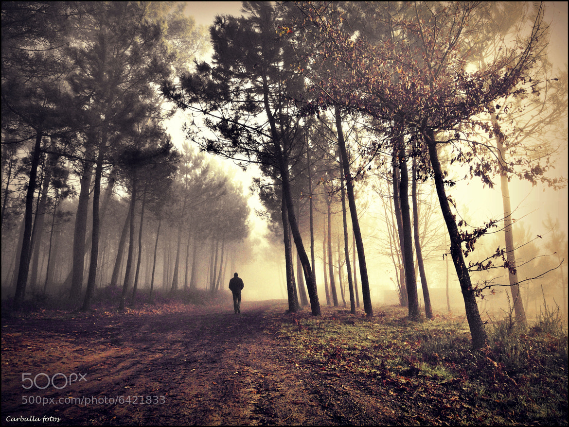 Photograph Morning fog in the forest by Guillermo  Carballa on 500px