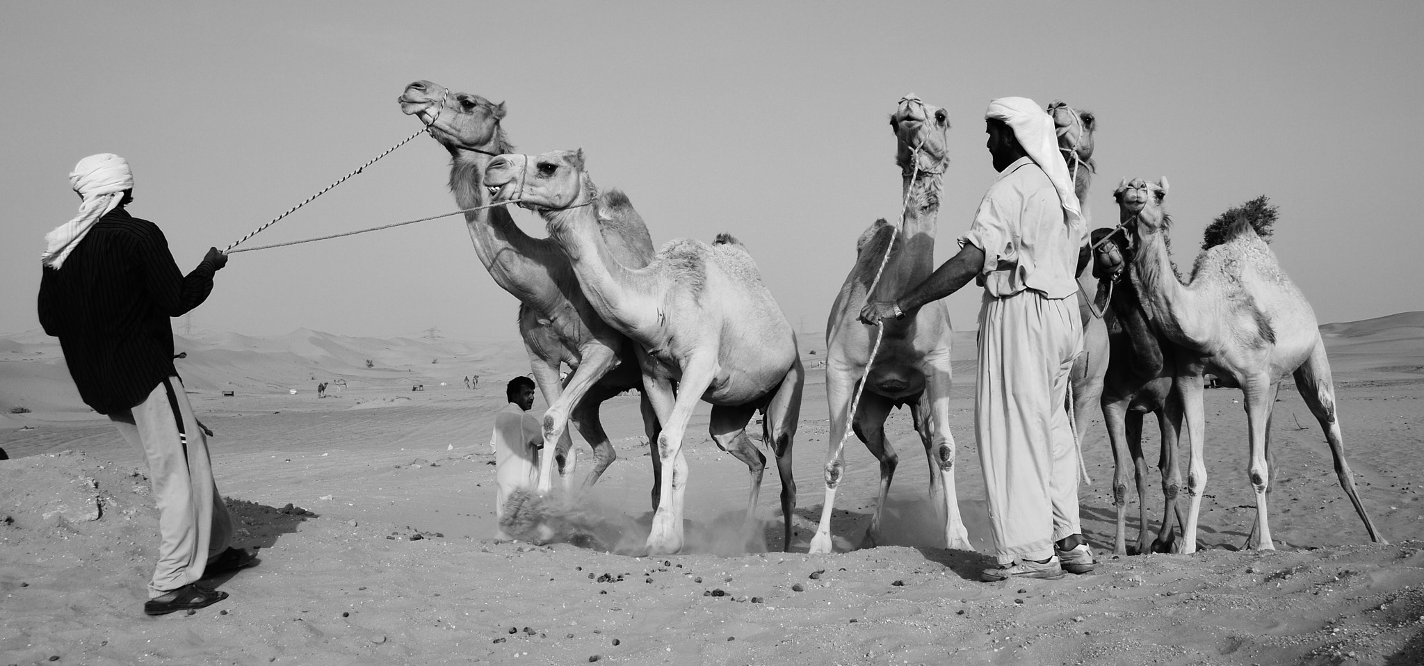 Photograph Camels by Aj Nat on 500px