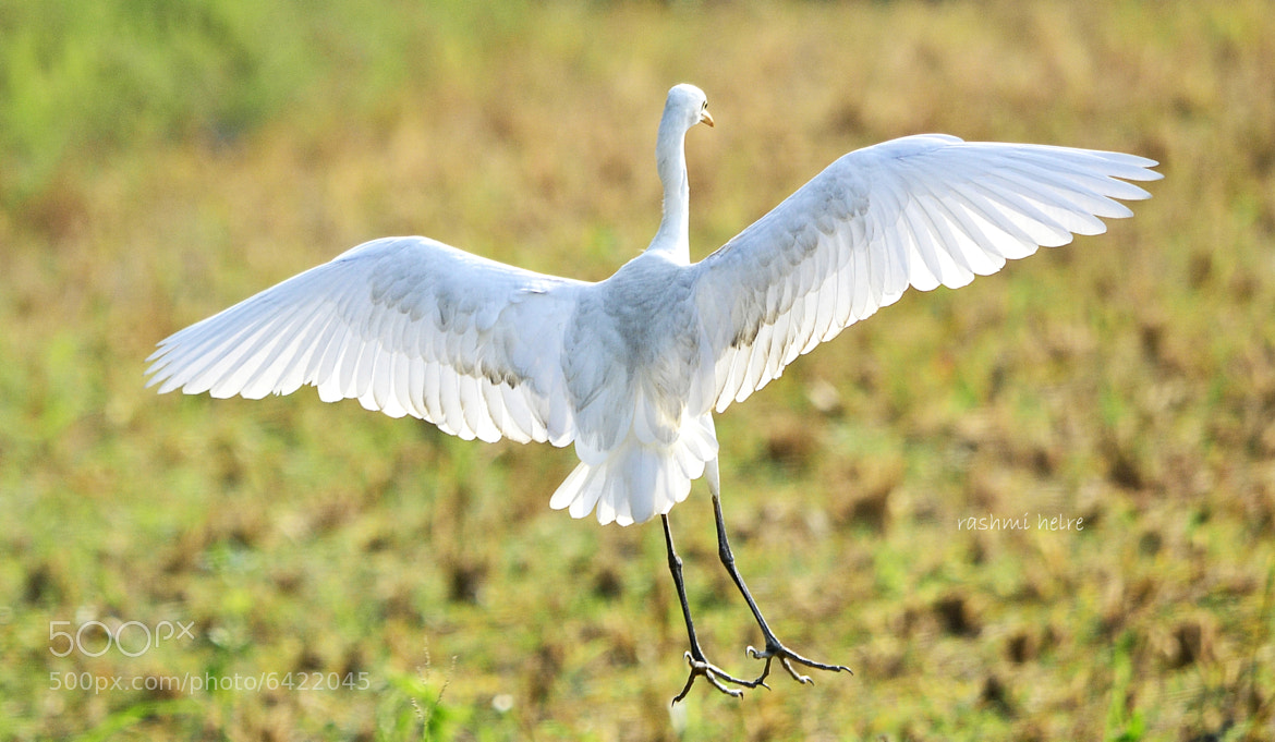 Photograph  Wide wings by Rashmi Herle on 500px