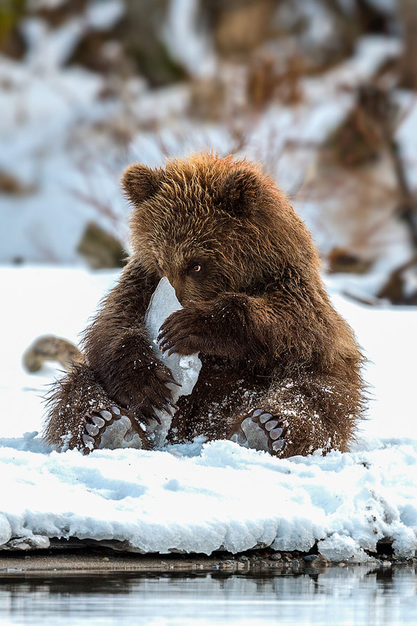 Photograph Ice toy by Sergey Ivanov on 500px