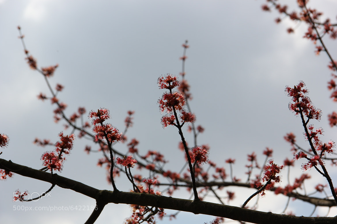 Photograph Spring comes by Nadea Leiter on 500px