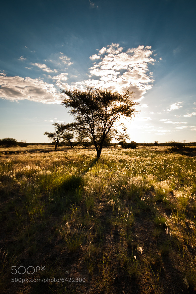 Photograph Burning tree by Shawn van Eeden on 500px
