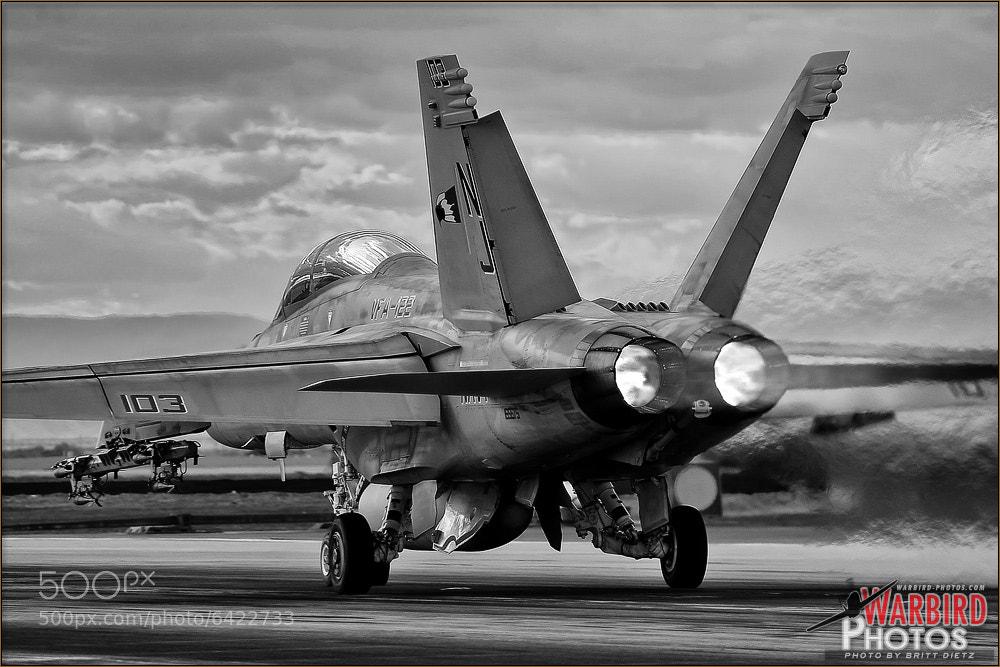 Photograph Harsh Hornet Details by Britt Dietz on 500px