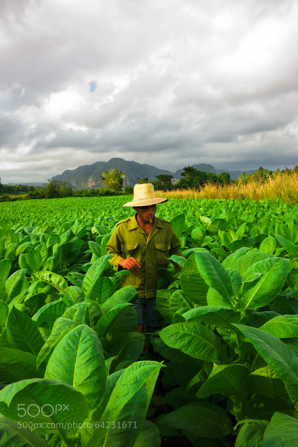 Photograph Cigar fields forever by Jekurantodistaja on 500px