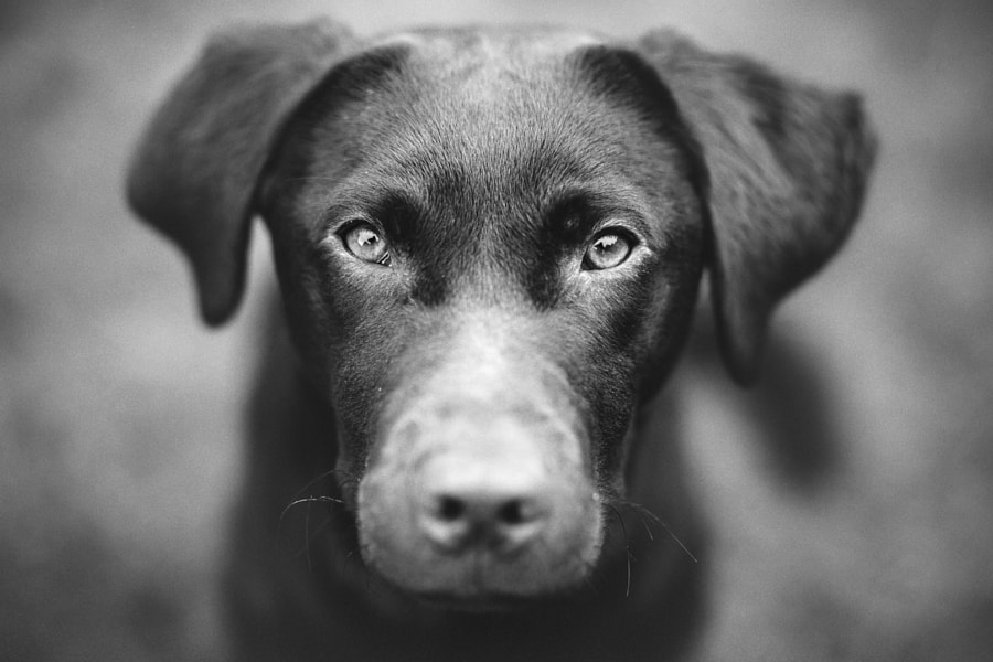 Ziggy 10 months old by Greig Reid on 500px.com
