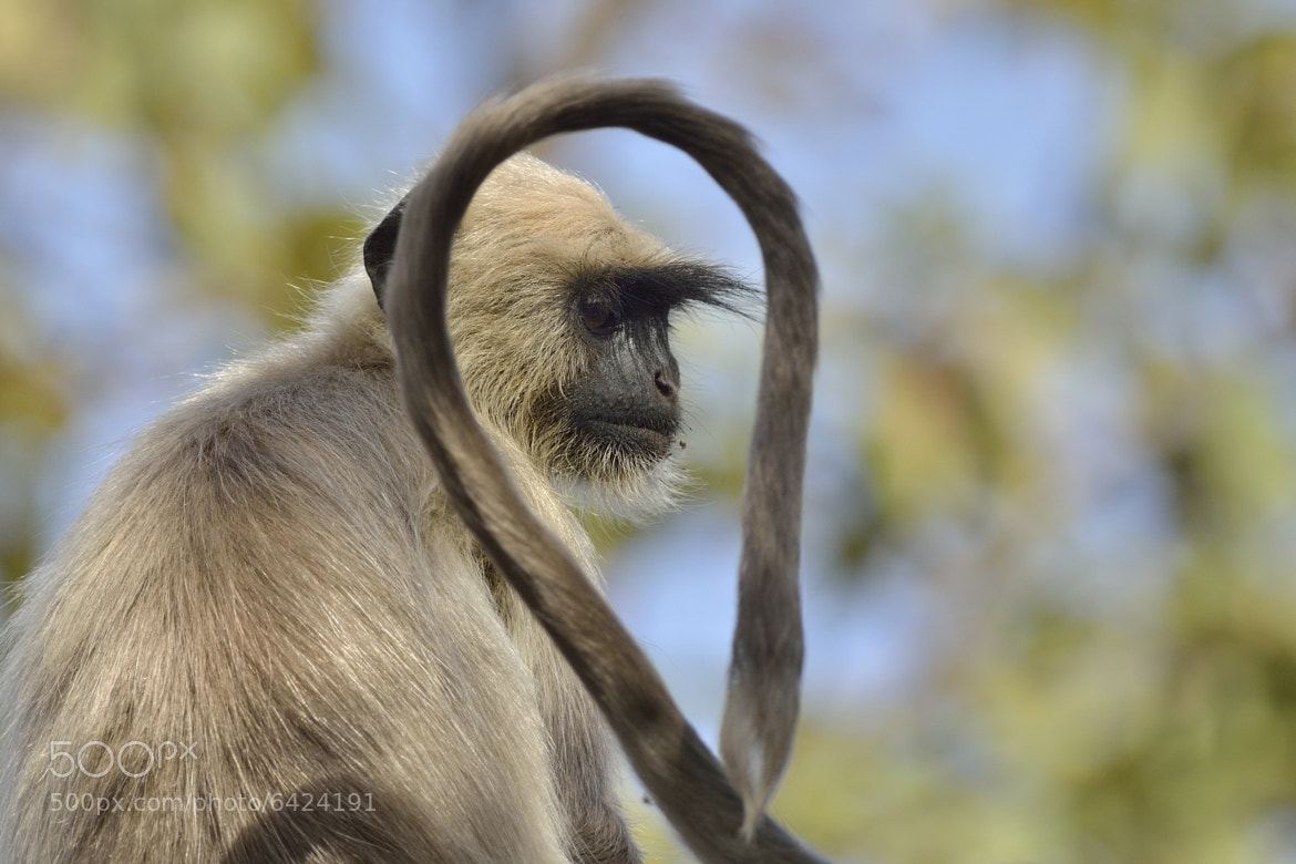 Photograph Langur by Mats Brynolf on 500px