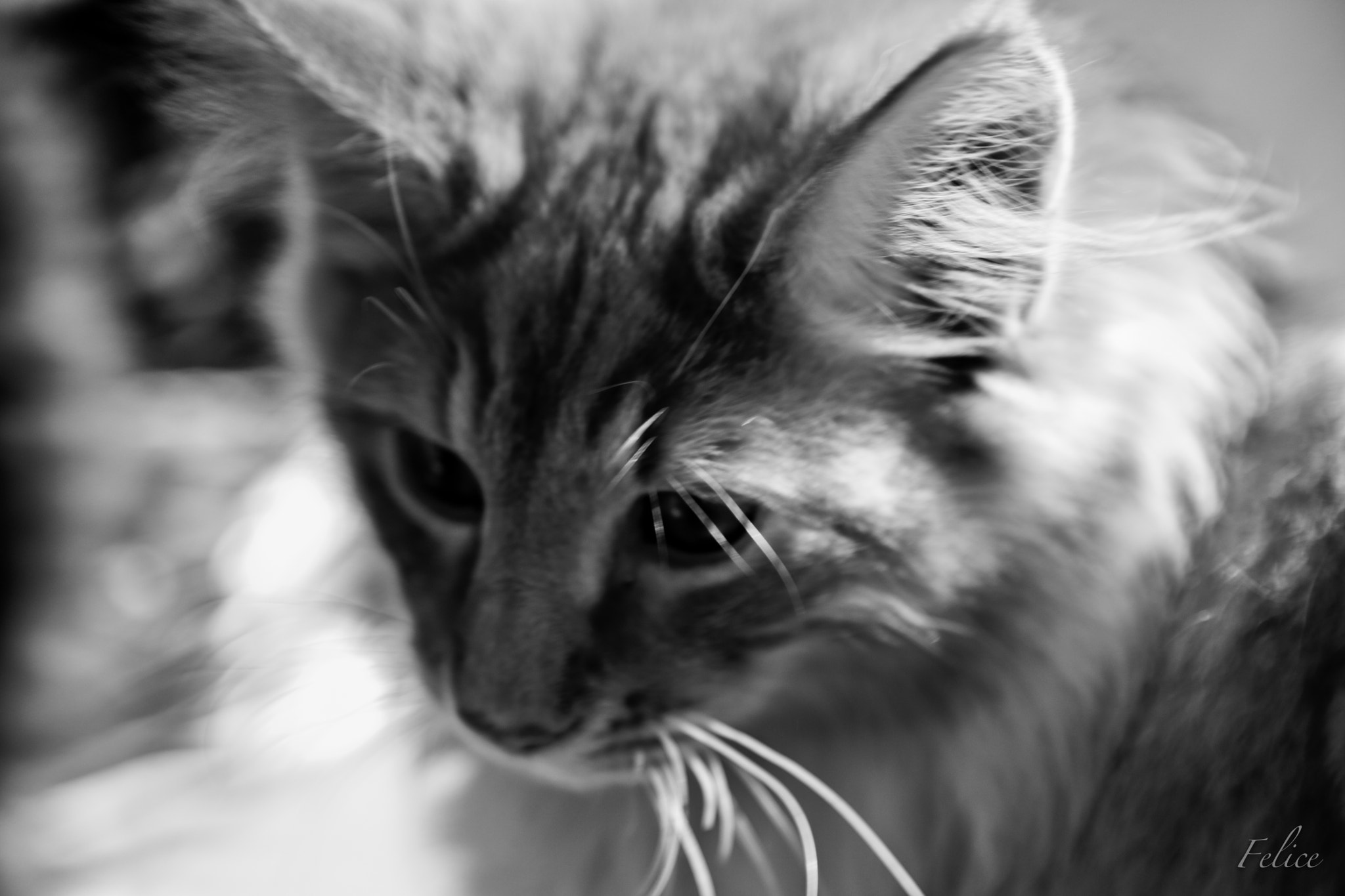 Photograph Cat by Felice V. on 500px