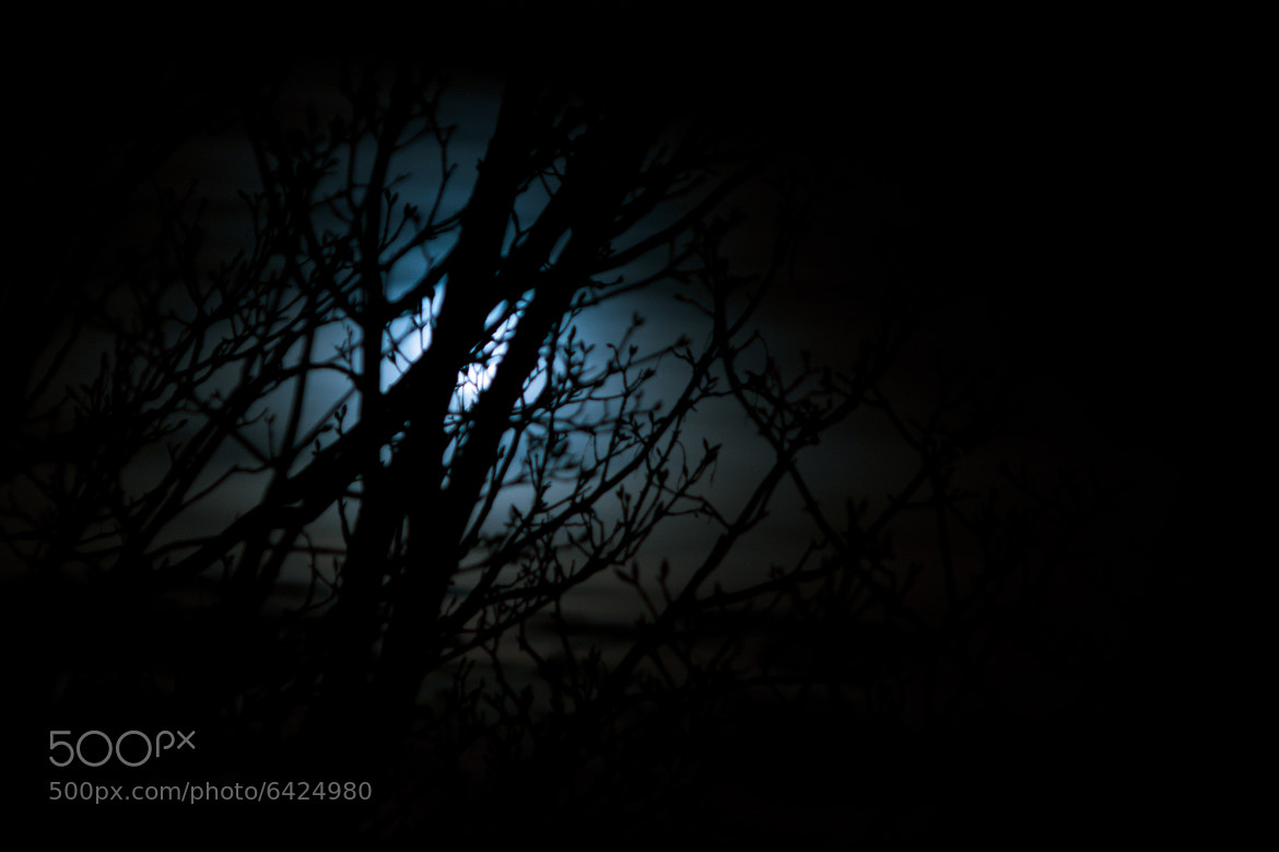 Photograph Moon behind trees by David Asch on 500px