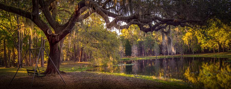 The tree & alligators