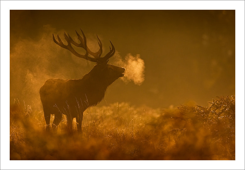 Photograph Breathe by Jules Cox on 500px